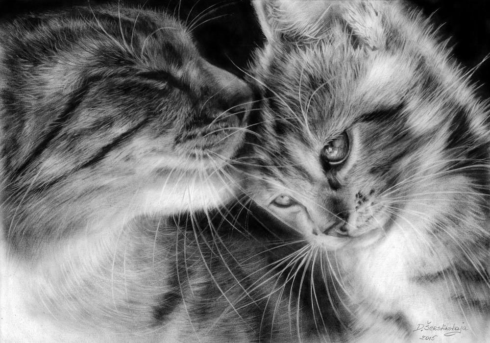 Mom Cat And Her Kitten