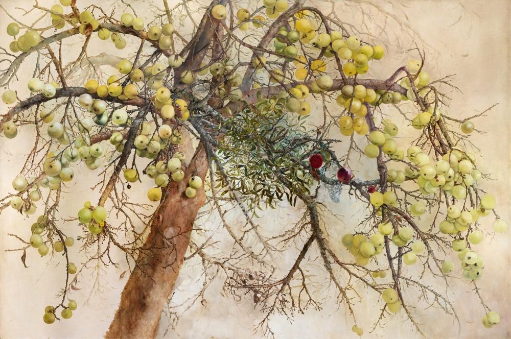 Obuolių medis